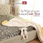Đệm bông ép Canada Wind BE5 kích thước 220x200x18cm